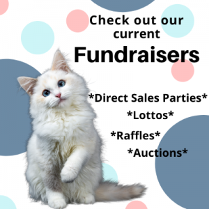 cat rescue fundraisers