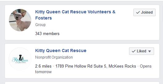 facebook foster volunteer group
