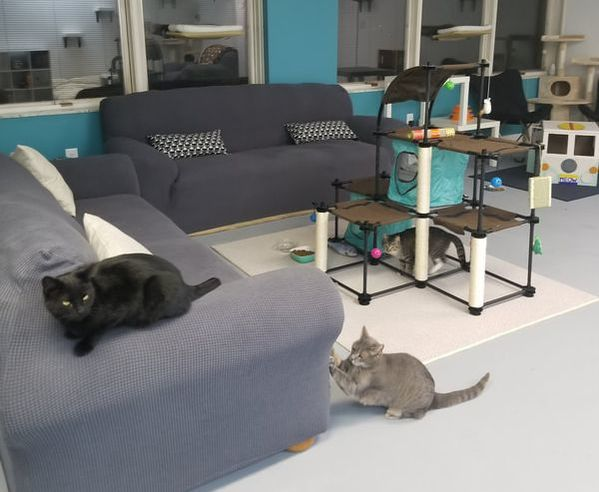 cat lounge cat cafe pittsburgh
